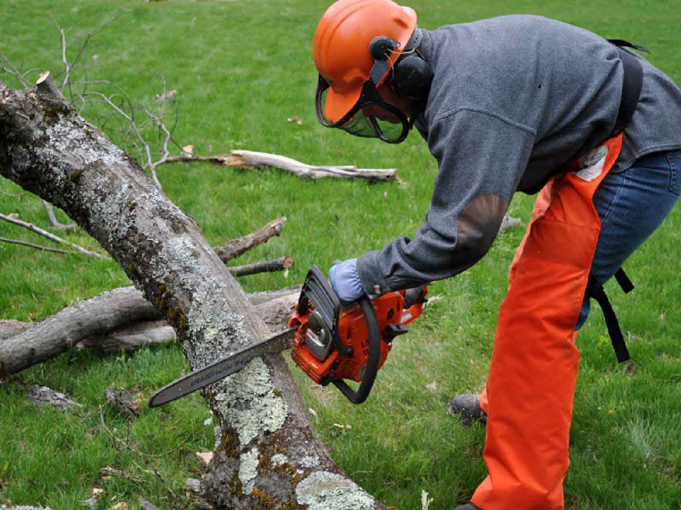 Fellers Tree Felling, Professional Tree Fellers, Very Good Rates, Tree Felling Services, Garden Cleaning Service, Excellent Safety And Service Record
